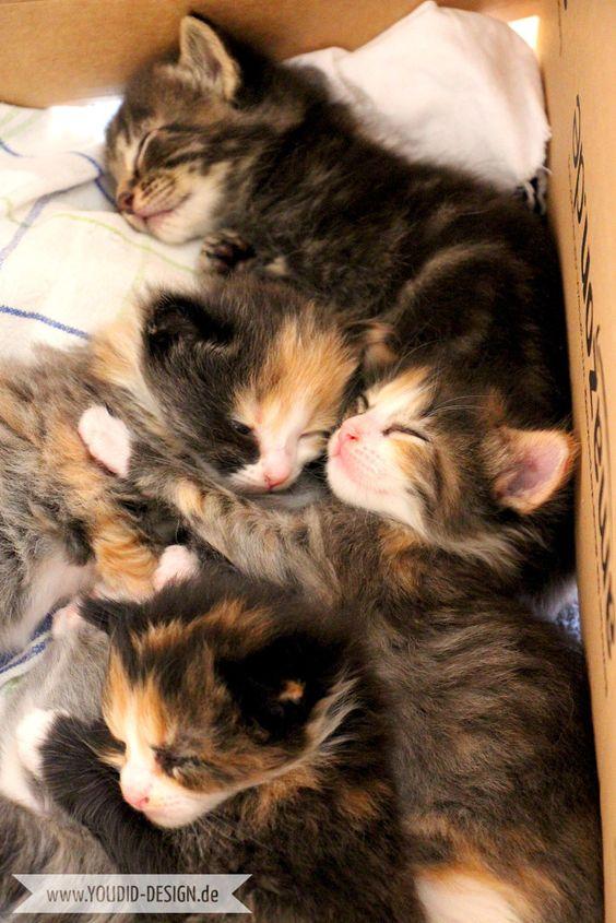 5 Katzenbabys Schlafenszeit | www.youdid-design.de