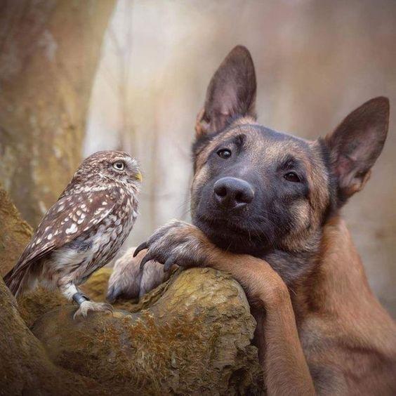 De belles images d'amitié - Page 2 4c659d463f5d33fc6cbc0cbe6a4bab15