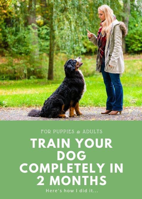 Training Your Dog Will Never Be An Easy Task Untill You Learn The