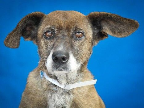 Owner moves leaving senior dog behind at animal control we are sorry baby, keep sharing for a new furever home <3