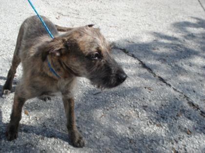 Adopt Teddy On Animals Foster Animals Rescue Dogs