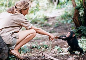 """The more we learn of the true nature of non-human animals, especially those with complex brains and corresponding complex social behavior, the more ethical concerns are raised regarding their use in the service of man -- whether this be in entertainment, as """"pets,"""" for food, in research laboratories, or any of the other uses to which we subject them. Jane Goodall English ethologist & zoologist (1934 - )"""