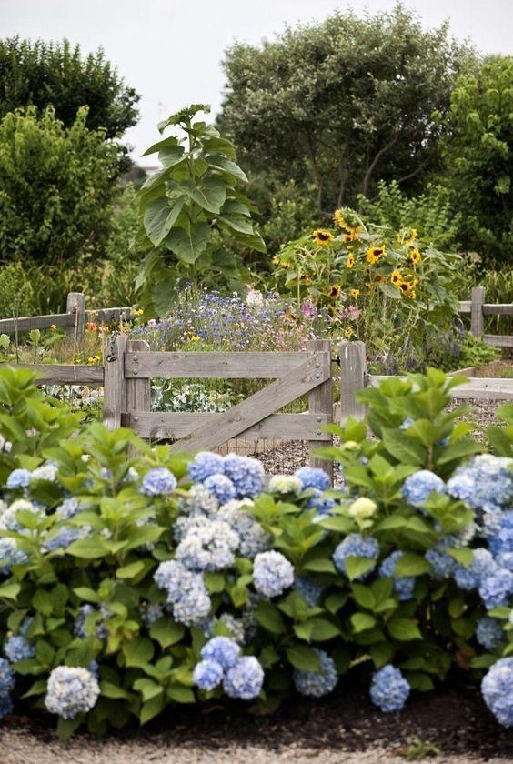 brewster flower garden hydrangeas sunflowers fence gardenista