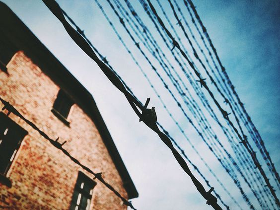 The author titied this picture 'Irrational will'. A fragment of block of the Auschwitz I camp and lines of barbed wire.