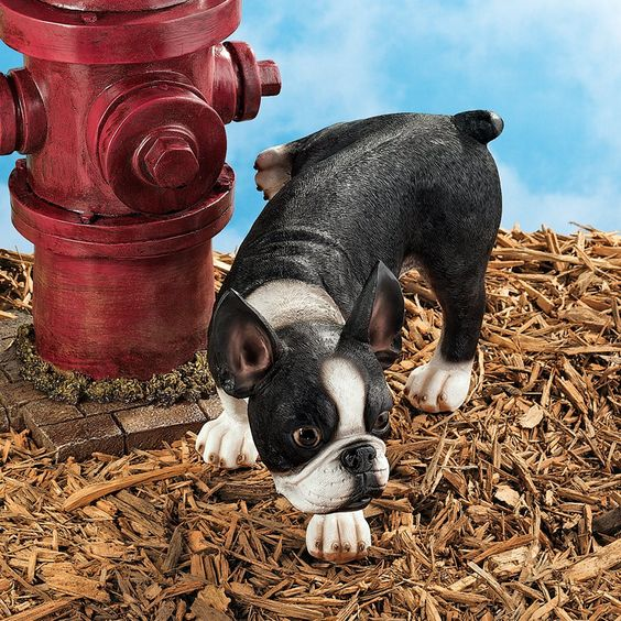 Lifting a Leg Naughty Boston Terrier Dog Statue: Set of Two