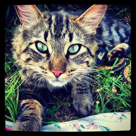 Kitty Cat     http://viettelidc.com.vn/dich-vu/thue-cho-dat-thiet-bi.aspx  http://viettelidc.com.vn/dich-vu/thue-may-chu.aspx  http://viettelidc.com.vn/dich-vu/may-chu-ao-VPS.aspx  http://viettelidc.com.vn/dich-vu/dich-vu-hosting-email.aspx