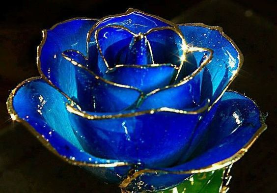 good morning blue roses - Hledat Googlem: