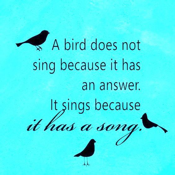 Songs, Birds And Love Birds On Pinterest