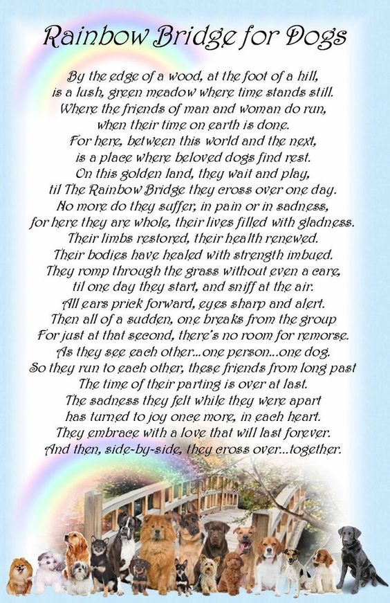 rainbow bridge pet poem printable - Google Search ...