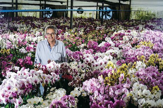 Conheça o segredo da empresa que ganha R$ 28 milhões com orquídeas https://t.co/cKCI4SOzh1  https://t.co/xqD1Ob8WtG https://t.co/ZwsW65uquS