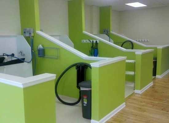 Self serve dog wash and dogs on pinterest for Dog grooming salons near me