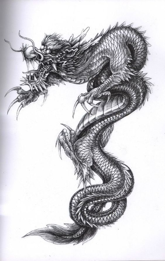 China Dragon  tat1  Pinterest  Chinese dragon The head and