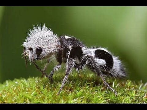 Топ 10 необычных и удивительных муравьёв мира
