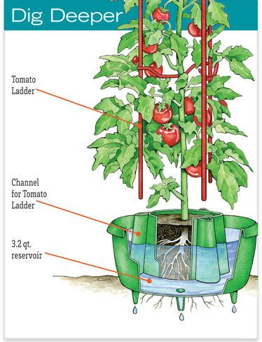 Tomato Halos For Watering Cutworm Control Gardener S Supply