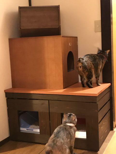 デュオトイレ 2つしまえるトイレカバー 猫部屋 猫 インテリア 猫の家具