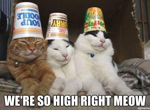 So Be It Funny | High cats: we're so high right meow