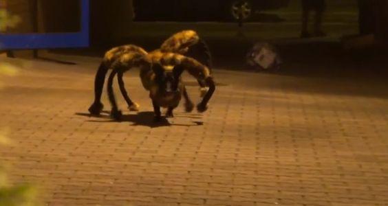 Μια τρελή φάρσα με μεταλλαγμένο σκύλο - Verge