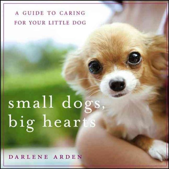 Small Dogs Big Hearts: A Guide to Caring for Your Little Dog