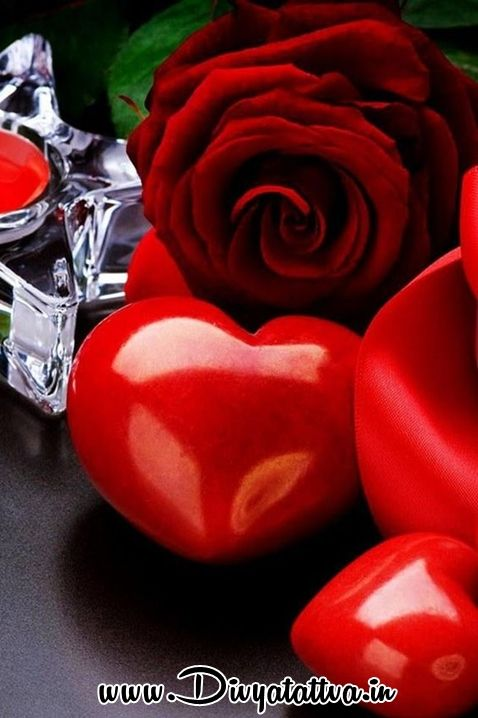 Free Download Love Wallpapers Hearts Mobile Red Rose Love