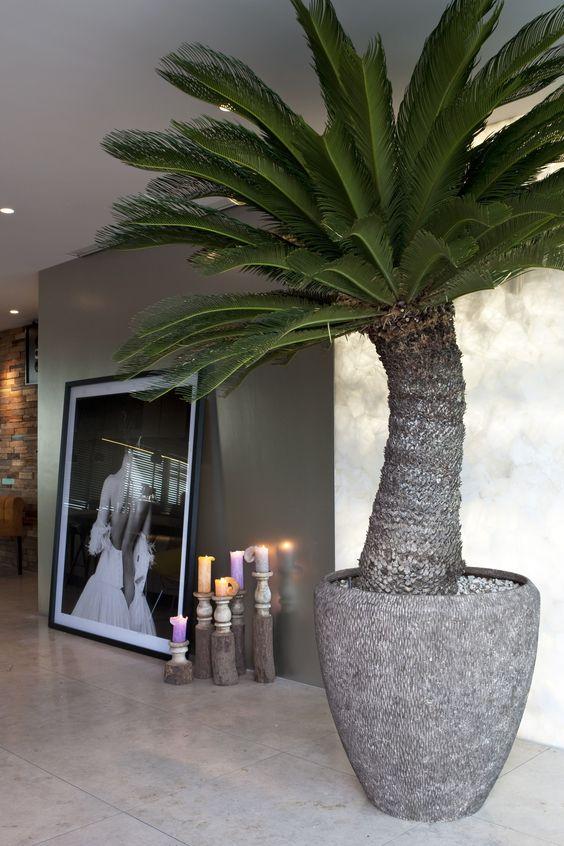 10 fysieke en mentale voordelen van kamerplanten