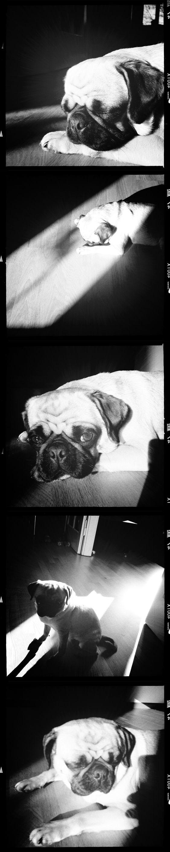 Monochrome Lola #Pug