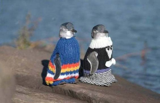 After the oil spill the penguins in New Zealand needed sweaters knitted.  Wish I could have made one!