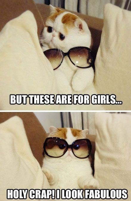 Adorable cat with glasses