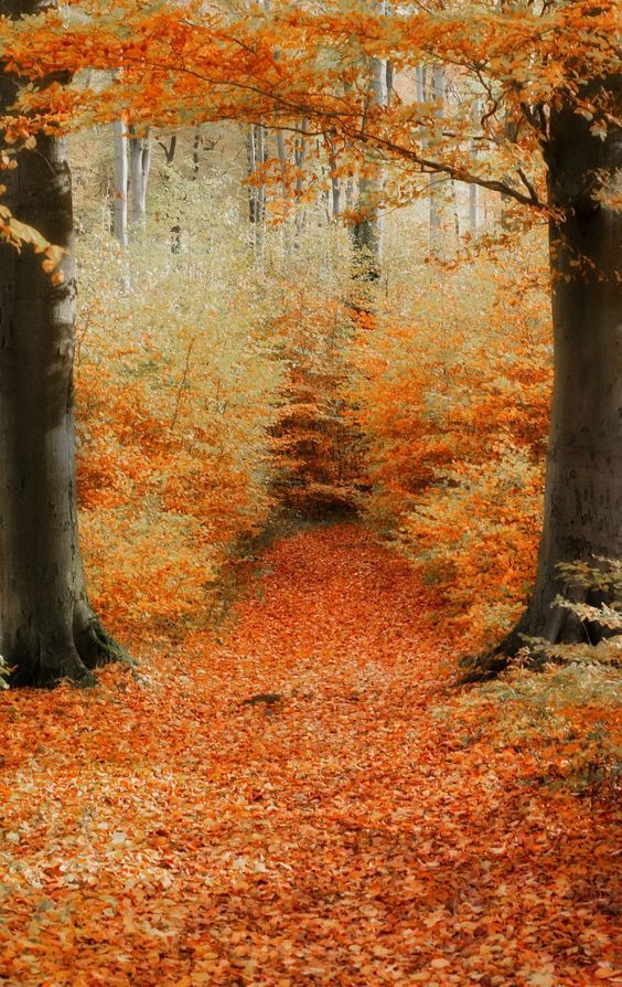 Lens Perspectives Autumm Detlef Knapp Autumn Scenery Fall Pictures Scenery
