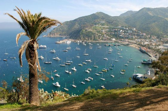 The most fun things to do on Catalina Island with kids...