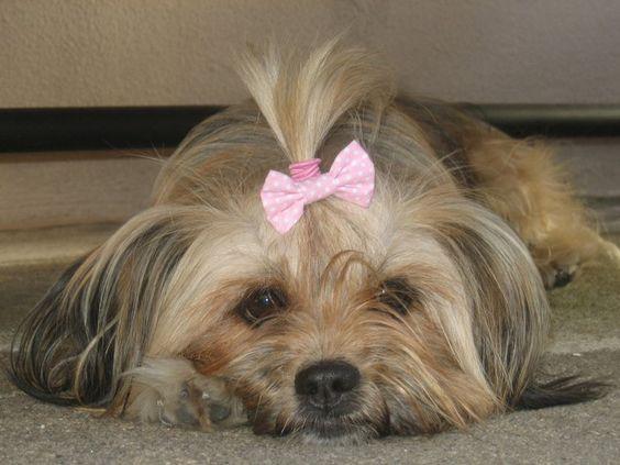 A minha Nina :) ainda ela de lacinho e pêlo grande lol :)
