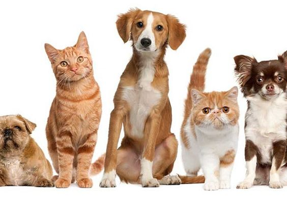 PET Psychic Reading  Pet Who Has Crossed by PsychicTarotSpells