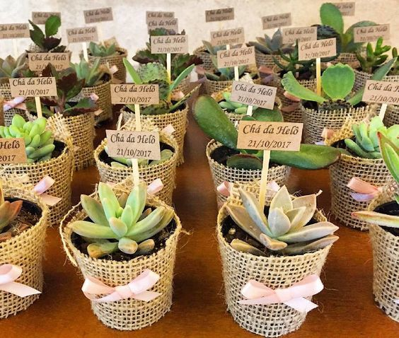A mini succulent plant for your guest :)