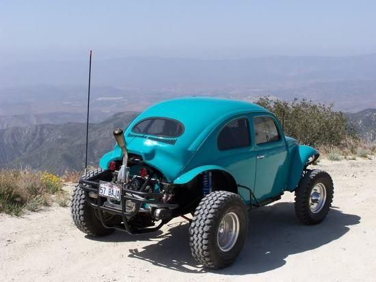 Supetrapp Beetle