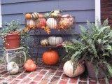 I love plants...and pumpkins!