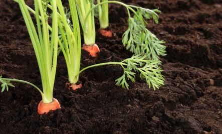 5 Tips for a Water-Saving Garden
