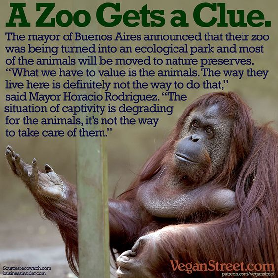 The city of Buenos Aires has closed its zoo and will move its nearly all of its 2,500 animal residents to sanctuaries and nature preserves (except a few who are too old or sick to travel). Maybe this will simply be the first of many zoos to see the light. http://veganstreet.com/dailymeme-6-28-16.html