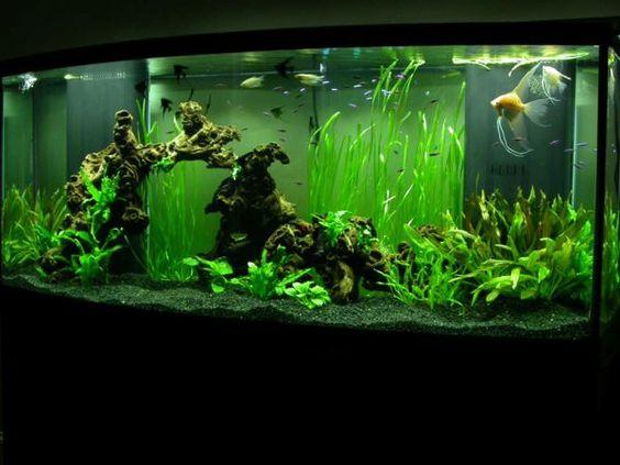 28 modern fish tanks that inspire relaxation pinterest for Modern fish tanks