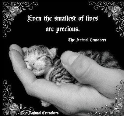 Even the smallest of lives are precious