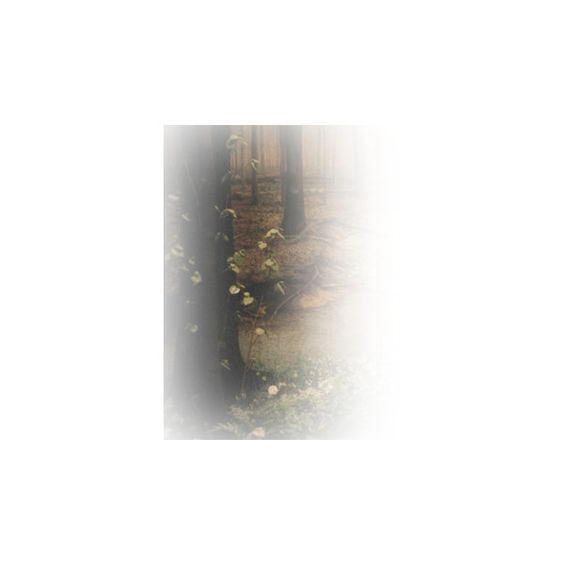 Epifanías Imagenes Editadas PNG ❤ liked on Polyvore featuring forest