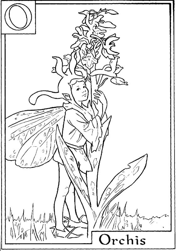 download and print letter o for orchis flower fairy coloring page digi images pinterest. Black Bedroom Furniture Sets. Home Design Ideas