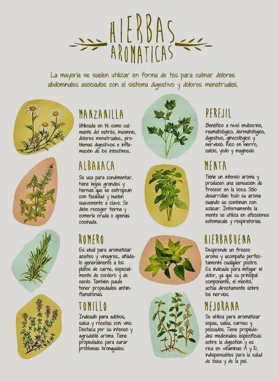Hierbas aromaticas decorando la cocina pinterest for Hierbas y plantas medicinales