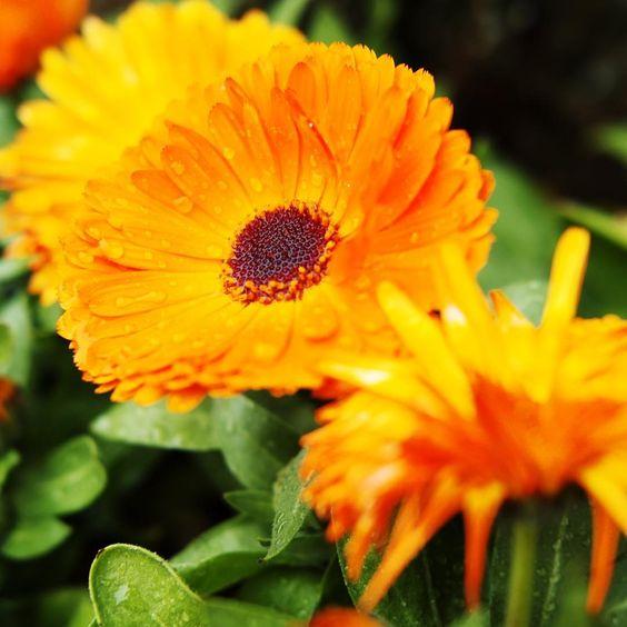 雨の滴が溜まる花。