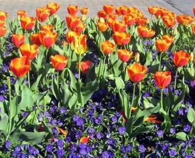 Springtime in Atlanta