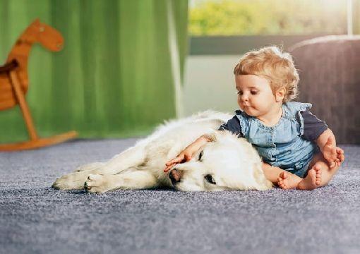 Homeplaza - Textiler Bodenbelag überzeugt durch Design und Materialeigenschaften - Multi-Talent Teppichboden