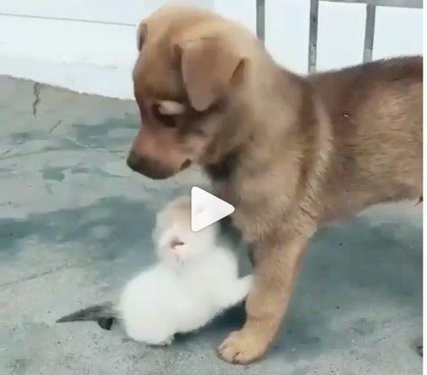 Cachorro rato?