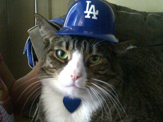 This Dodger Cat is brought to you by: @DodgerChik3155