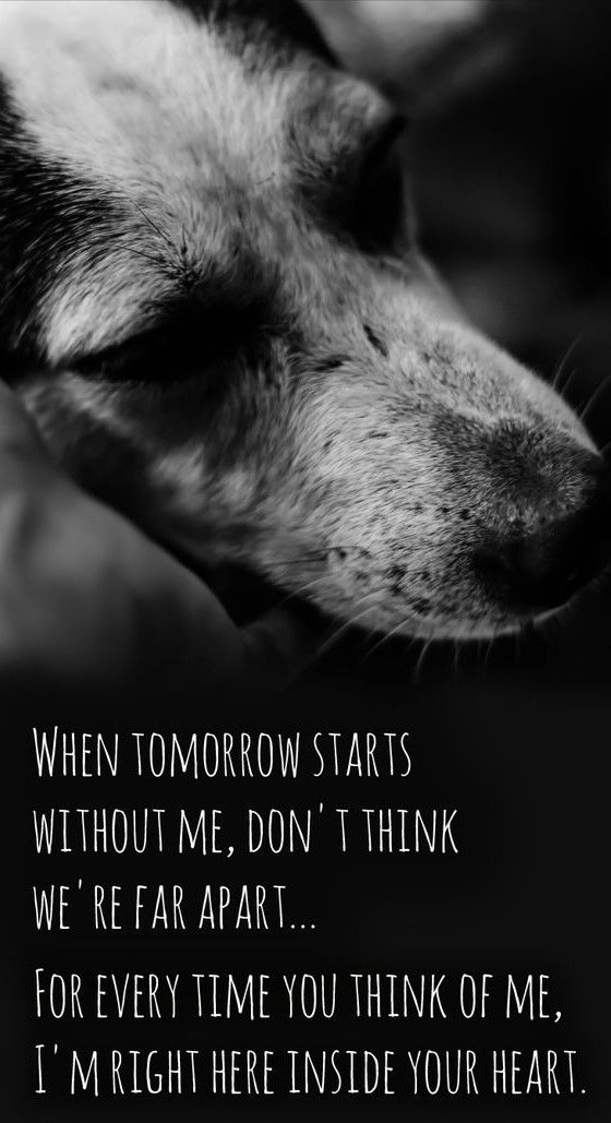 For My Wonderful Jack Russel Dog Milly Who Passed Away 27 September 2017 Aged 14 Photo By 4knines Com Dog Quotes Dog Poems Miss My Dog