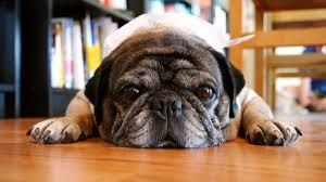 """Il cane scopre il ladro e lo """"arresta"""" nel bagno di casa :http://www.qualazampa.news/2015/12/10/il-cane-scopre-il-ladro-e-lo-arresta-nel-bagno-di-casa/"""