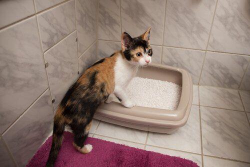 Cómo Hacer Cajas De Arena Caseras Para Gatos Mis Animales Flushable Cat Litter Cat Litter Box Cat Litter