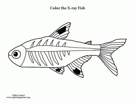 X Ray Fish Coloring Page In 2019 Fish Coloring Page Horse